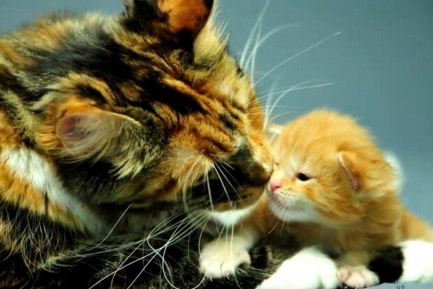 Kinderreiche Mutter. Quelle: Screenshot YouTube