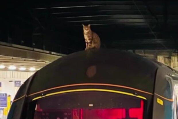 Katze auf dem Dach des Zuges. Quelle: Screenshot Youtube