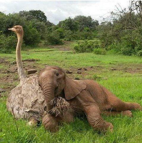 Ein verwaister Elefant, der seine Mutter verloren hat, umarmt jeden Tag einen Strauß