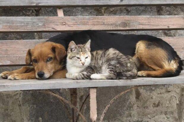 Tiere mit großer Lebenslust. Quelle: Screenshot YouTube
