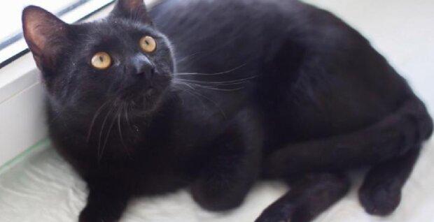 """""""Sie hat abgenommen und ist ein Vielfraß geworden"""": Schwarze Katze nach fünf Jahren Suche wieder zu Hause"""