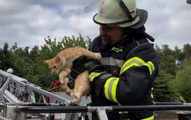 Feuerwehrmann rettet eine Katze. Quelle: Screenshot Youtube
