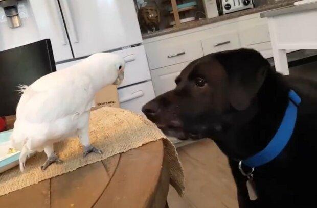 Erstaunliche Freundschaft unter Tieren. Quelle: Screenshot YouTube
