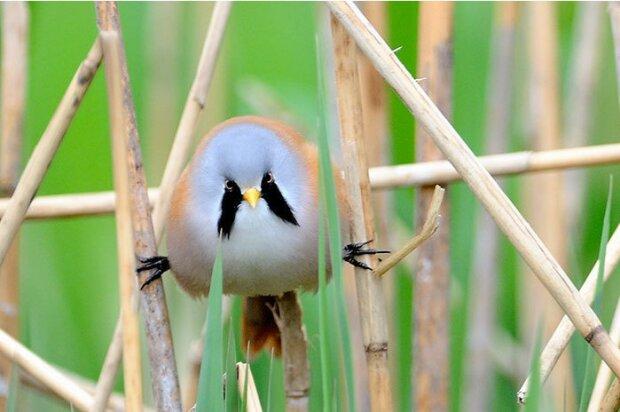 Lustige Vögel, die erstaunliche Dehnung haben