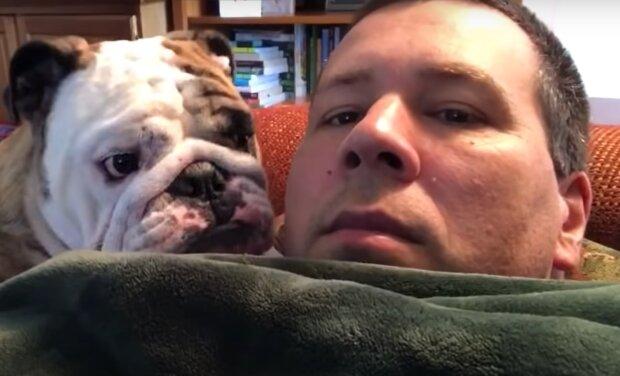 Englische Bulldogge. Quelle: YouTube Screenshot