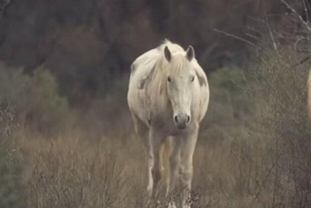 Einzigartige Aufnahmen von Tieren. Quelle: Screenshot YouTube