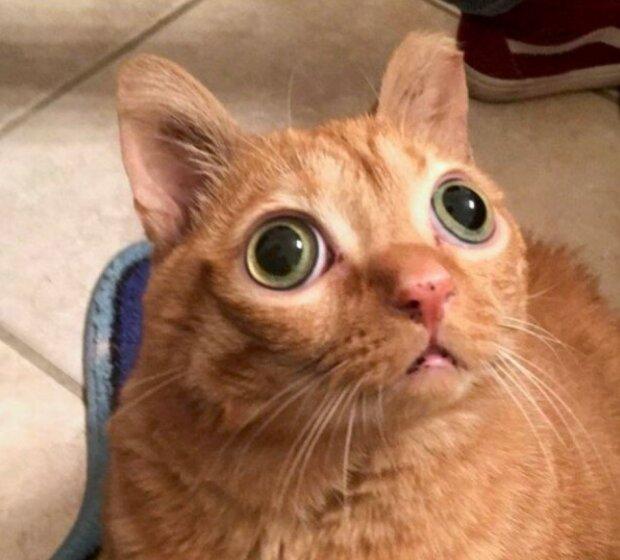 Eine Katze mit ungewöhnlichen Augen