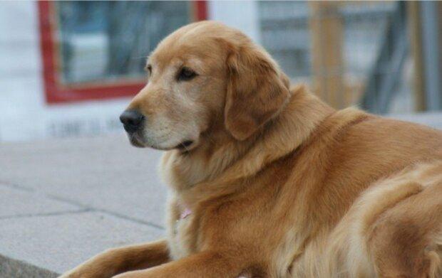Ein Mann nahm einen Hund mit nach Hause und bemerkte, dass er nachts nicht schläft, sondern zur Tür geht und die Menschen bis zum Morgen ansieht