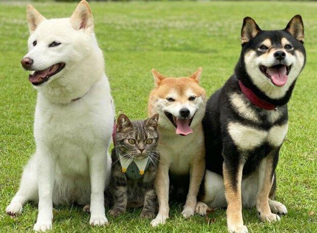 Die Japanerin brachte einen Freund zu ihren drei Hunden, der sehr gut in die Mannschaft passte