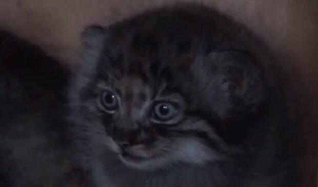 Ungewönliches Kätzchen. Quelle: Screenshot YouTube