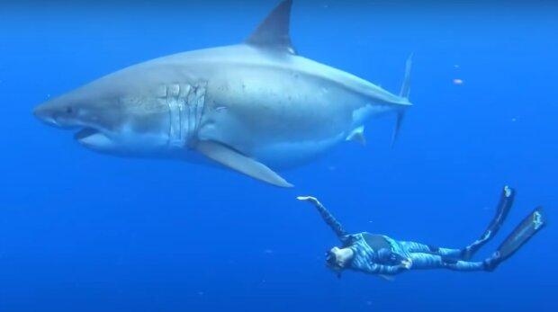 Taucher und Hai. Quelle: YouTube Screenshot