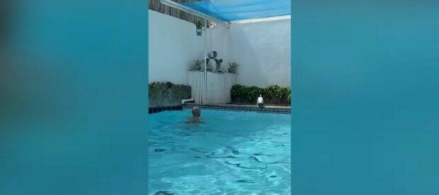 Der treue Hund behält seine Besitzer im Auge, während sie im Schwimmbad schwimmen