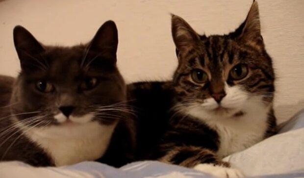Katzenpaar. Quelle: YouTube Screenshot