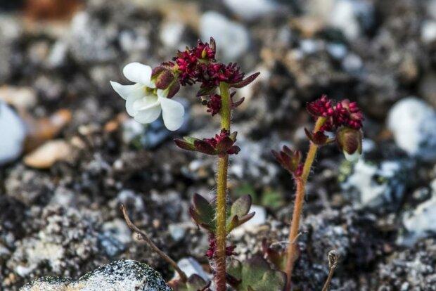 Ein neuer Fortschritt in der Botanik. Quelle: Screenshot YouTube