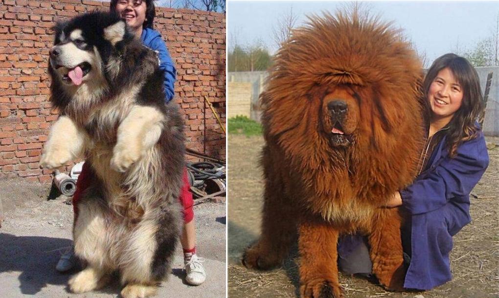 Preis Hund